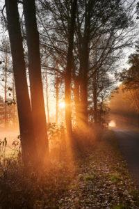 Deutschland, Niedersachsen, Lüneburger Heide, Brietlingen, Lüdershausen, Weg zum Reihersee, Wald, Sonnenaufgang, Nebel, Lichteinfall