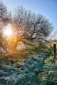 Germany, Lower Saxony, Lüneburg Heath, Lüneburg, Düvelsbrook, Teufelsmoor, Uferweg, river, Ilmenau, fog, morning mood, back light