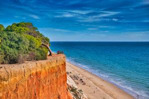 Europe, Portugal, Algarve, Litoral, Barlavento, District Faro, between Vilamoura and Albufeira, Praia da Falesia, cliffs and beach, wind-bent pine tree on the rock edge