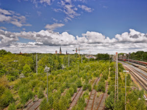 Rail transport system, biotope on disused railway tracks, Lüneburg marshalling yard, symbiosis of technology and nature, nature is taking back traffic space