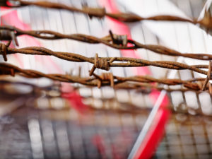 Icon image, barrier, barbed wire and ribbon, close-up of rusted barbed wire, blurred background