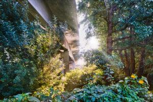 Architecture, technology and nature, under a bridge, superstructure against the light, concrete bridge protrudes from the vegetation, light spot