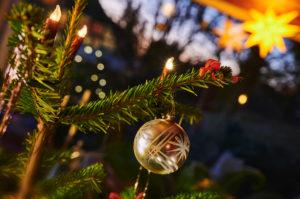 Christmas, Christmas custom, Christmas tree, fir branch, poinsettia, tree candles, dusk, blue hour, color contrast
