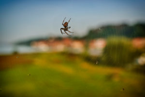 Nature, animal life, Germany, Northern Germany, Schleswig-Holstein, Elbe, shore near Lauenburg, melancholy mood, spider in a cobweb with dead flies, close-up, blurred background