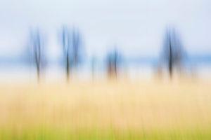 Artphoto, Intentional Camera Movement, Deutschland, Uferlandschaft, Elbtal, Norddeutschland, Niedersachsen, Elbe, Ufer bei Artlenburg, melancholische Stimmung, verwischte Vegetation