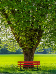 Rote Parkbank unter Baum