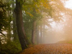 Herbstlicher Nebelwald
