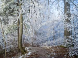 Nebliger Winterwald auf dem Uetliberg bei Zürich