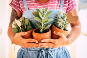 Home housewife caucasian adult woman holding three tropical plants - gardening job and work for people who loves nature - concept of garden and interior decoration - wokring in garden shop store business