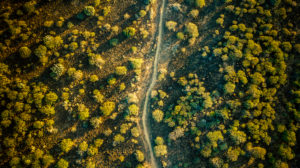forest, path, deforestation, drone shot