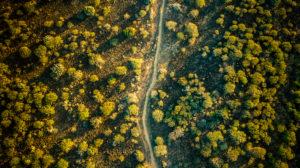 forest, path, deforestation, drone shot
