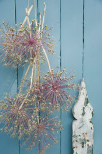 Lauchblüten als Wanddekoration