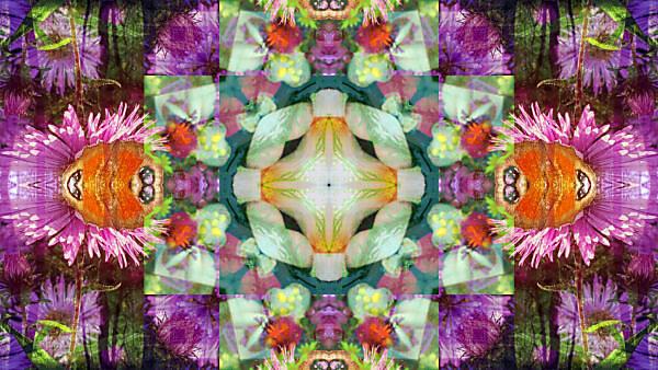 fotografisches Blüten Mandala, bunt,