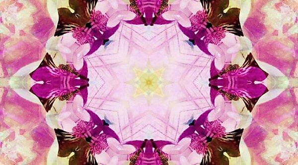 Photographic flower pattern, symmetrical