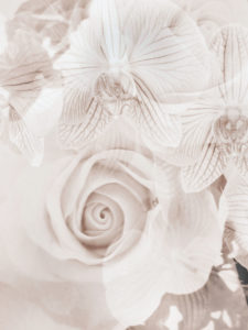 photomontage, Orchid, Rose, Flowers, Detail,