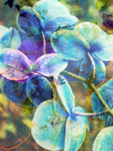 photomontage, orchid, flowers, blue, detail,