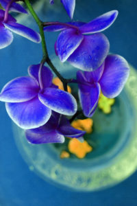 Vase, orchid, flowers, blue, detail,