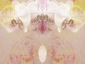 photomontage, orchid, flowers, detail,