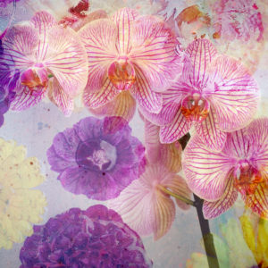 photomontage, flowers, flowers, detail, blur,