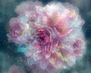 photomontage, flowers, blur,