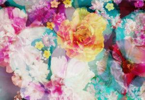 photomontage, flowers, multicoloured,