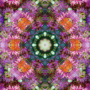 Photographic flower mandala, petrol, purple, orange,