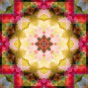 Photographic flower mandala, yellow, pink, red, green,