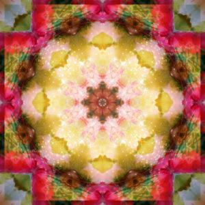 fotografisches Blüten Mandala, gelb, rosa, rot, grün,