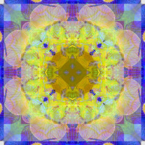 Photographic flower mandala, yellow, green, purple, blue,