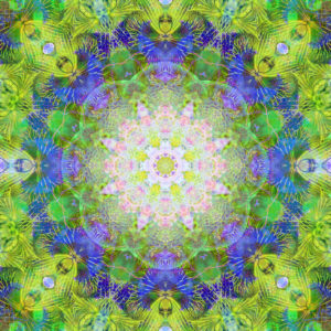 Photographic flower mandala, green, blue, pink,