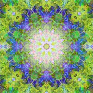 fotografisches Blüten Mandala, grün, blau, rosa,
