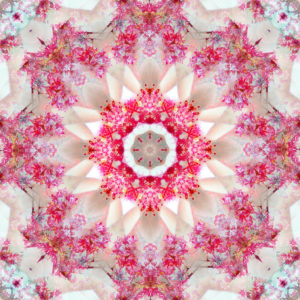 Photographic flower mandala, red, beige,