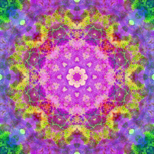 Photographic flower mandala, purple, pink, yellow, green,