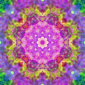 fotografisches Blüten Mandala, lila, pink, gelb, grün,
