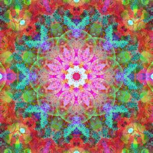 fotografisches Blüten Mandala, pink, rot, türkis,