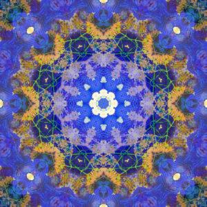 fotografisches Blüten Mandala, blau, lila, ocker,