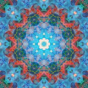fotografisches Blüten Mandala, blau, türkis, rot,