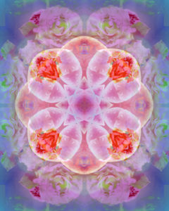 Photographic flower mandala, pink, rose-tinted, purple,