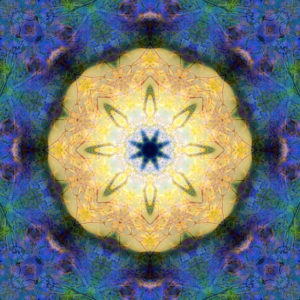 Photographic flower mandala, yellow, blue, green,