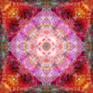 Photographic flower mandala, pink, red, orange,