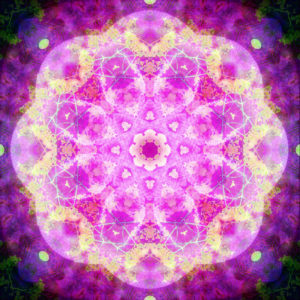 Photographic flower mandala, pink, yellow,