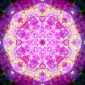 fotografisches Blüten Mandala, pink, gelb,