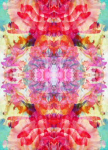 Photographic flower mandala, colorful,