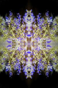 fotografisches Blüten Mandala, blau, gelb, schwarz,