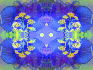 Photographic flower mandala, blue, yellow,