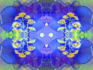 fotografisches Blüten Mandala, blau, gelb,