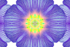 Photographic flower mandala, yellow, turquoise, purple,