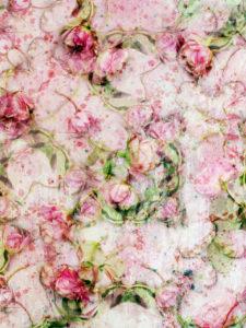 Photomontage, multiple exposure, flowers, roses, detail,