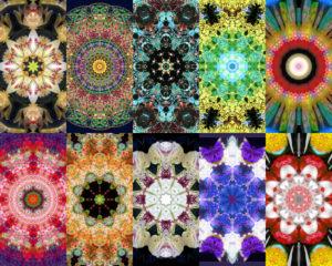 fotografische Blüten Mandala, viele, unterschiedlich