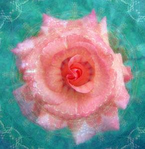 Photomontage, rose blossom, mandala,
